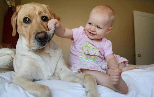 Домашние животные уберегают детей от астмы