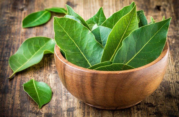 Способы лечения лавровым листом