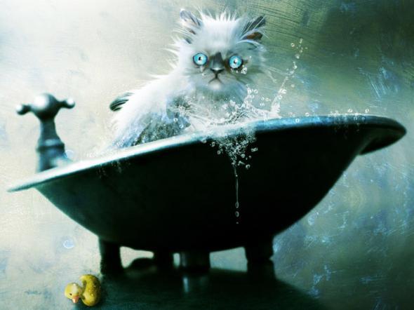 Купание кота – новый вид боевого искусства