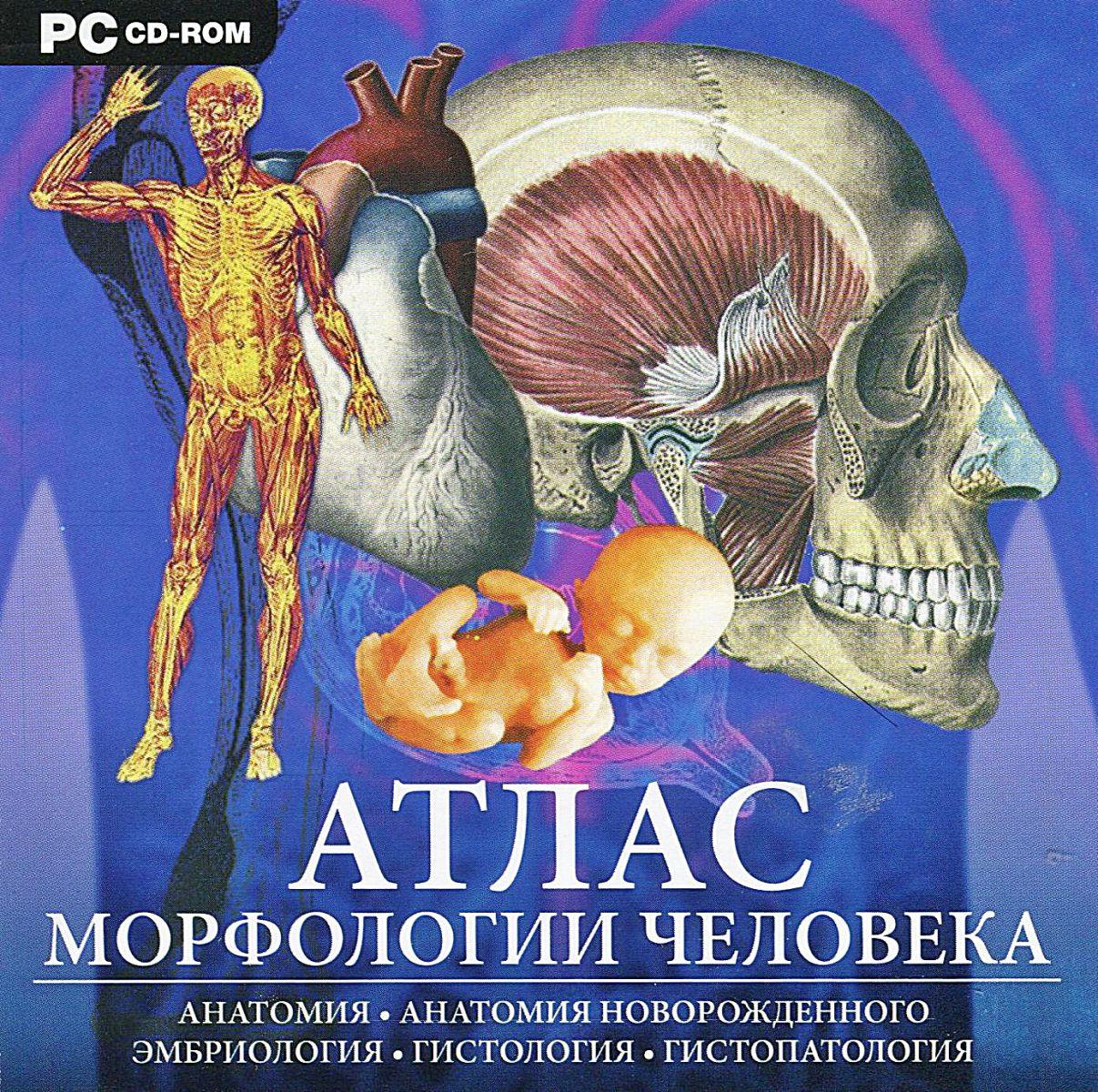 Атлас анатомии человека 7