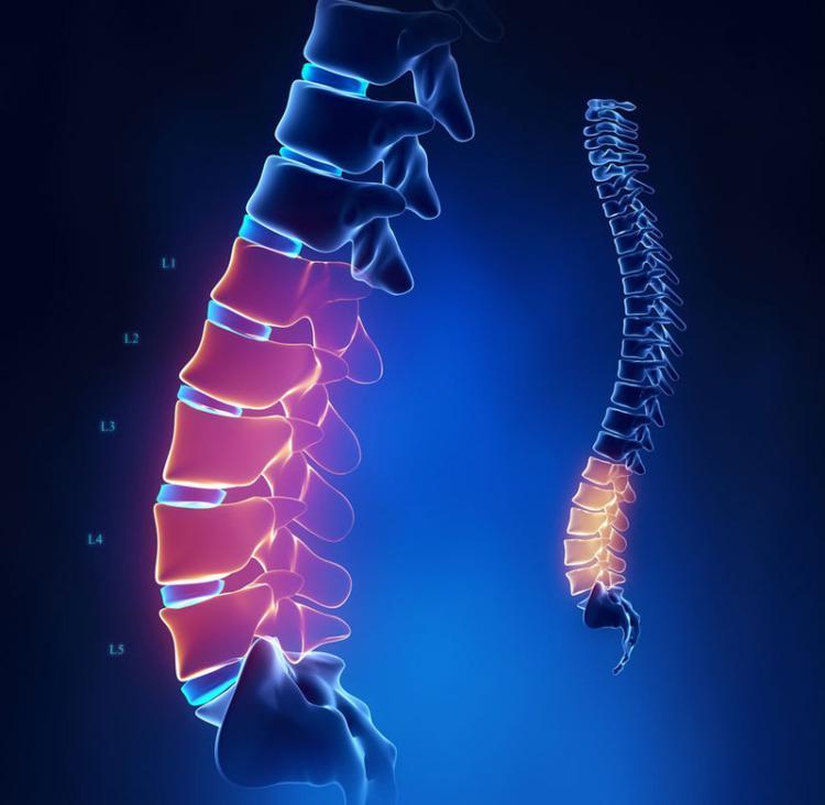 Упражнение «Крокодил» — исправляет врождённые и приобретённые нарушения позвоночника