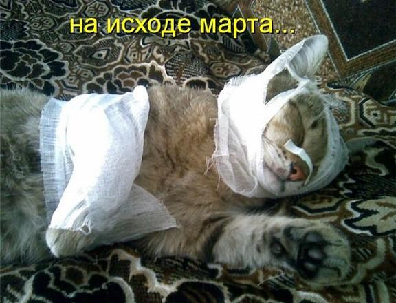 сайте представлена кот после кастрации боится близкого