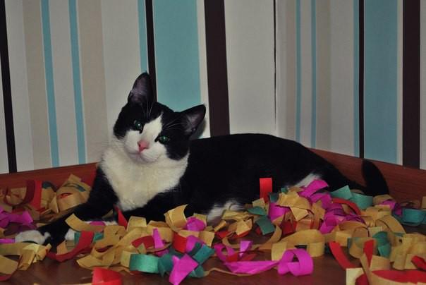 Наш кот выбрал нас сам доброта, кот