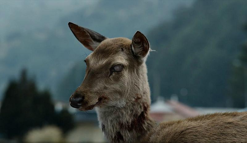 В США среди оленей распространяется зомби-болезнь