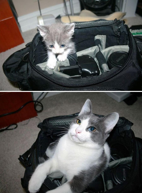 14 котят, которые так быстро выросли