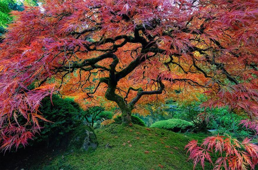 Необычные деревья, встречающ…
