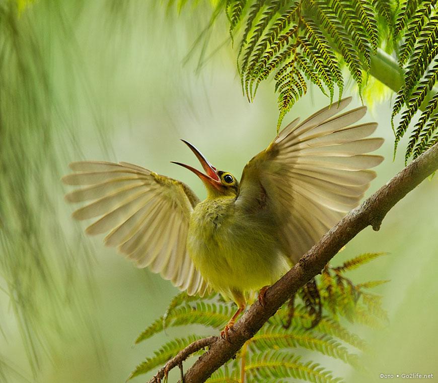 18 фотографий: удивительный мир - мгновения из жизни птиц в природе