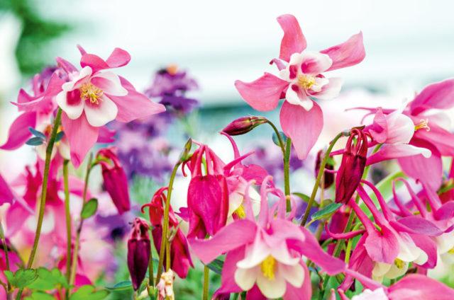 Какие цветы посадить на даче: варианты на любой вкус