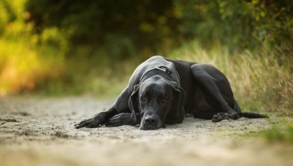 Женщина спаслась от насильника только благодаря собаке