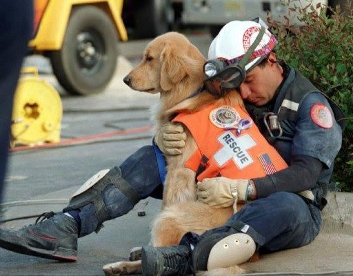 Да, это всего лишь пёс. И спасал он всего лишь людей....