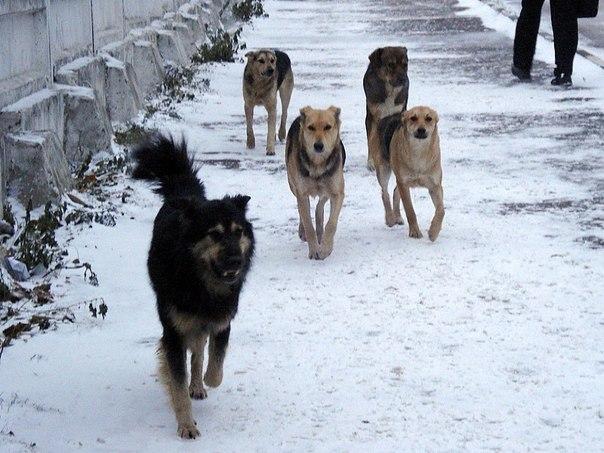 Скандал с отловом бродячих собак в Улан-Удэ грозит перерасти в уголовное дело.
