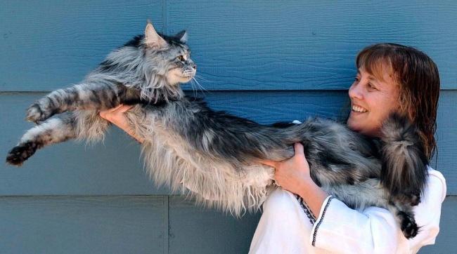 15 замечательных больших кошек