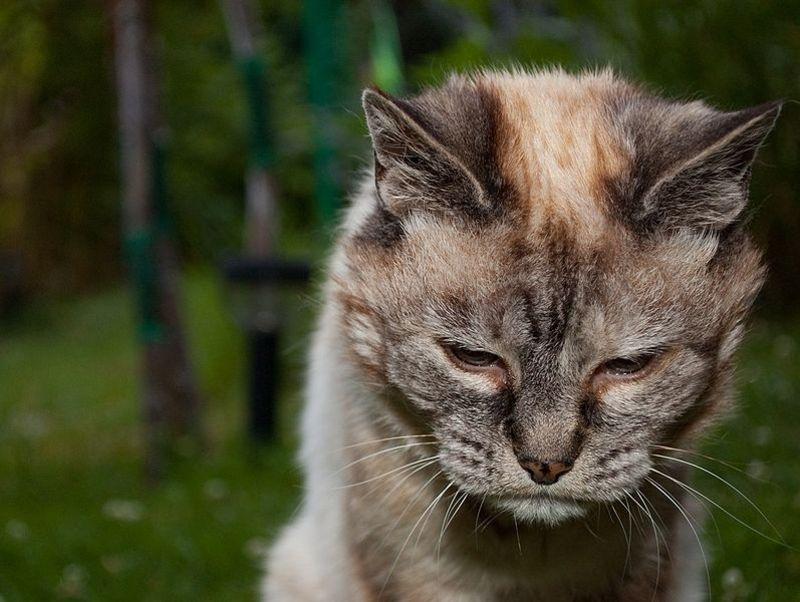 Как стареют коты