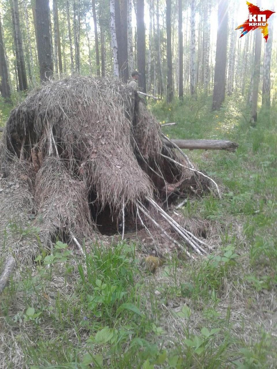 Диму нашли в километре от берлоги медведя Фото: ! Соцсети