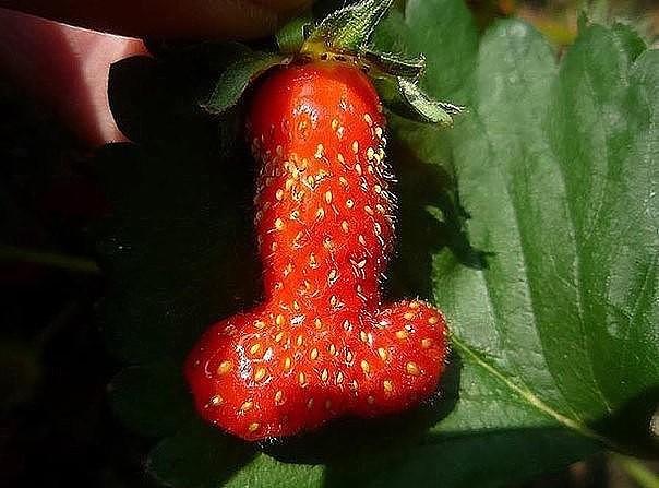 веселые фрукты и овощи 2 (604x447, 245Kb)