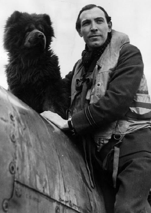 Собака - талисман эскадры  Союзных экспедиционных ВВС, оббегала каждый самолет перед взлетом.