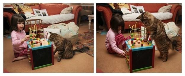 17. Эта терпеливая дама никогда не упустит возможности поиграть с лучшей подругой животные, котята, милота