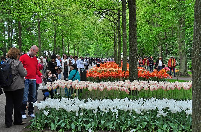 Сады Кёкенхоф – подлинное королевство тюльпанов