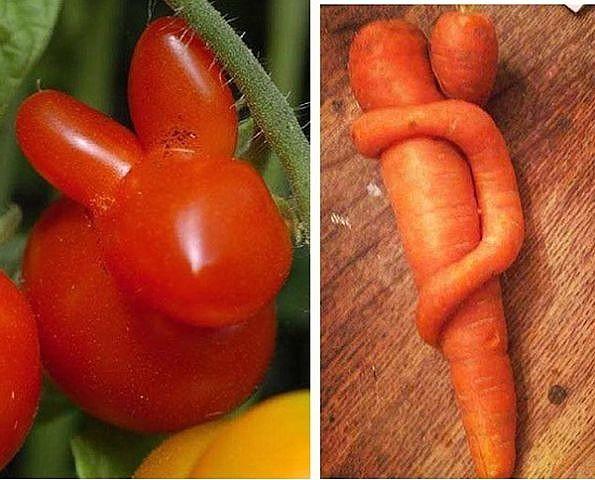 веселые фрукты и овощи 4 (595x480, 249Kb)