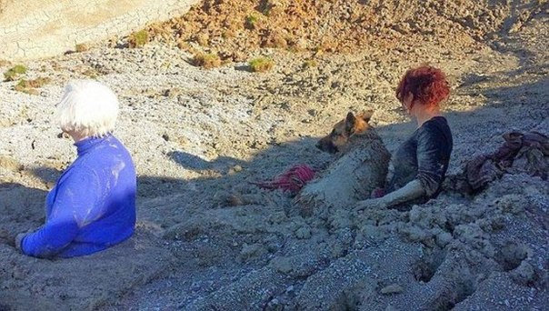 Попали в ловушку, пытаясь спасти свою собаку