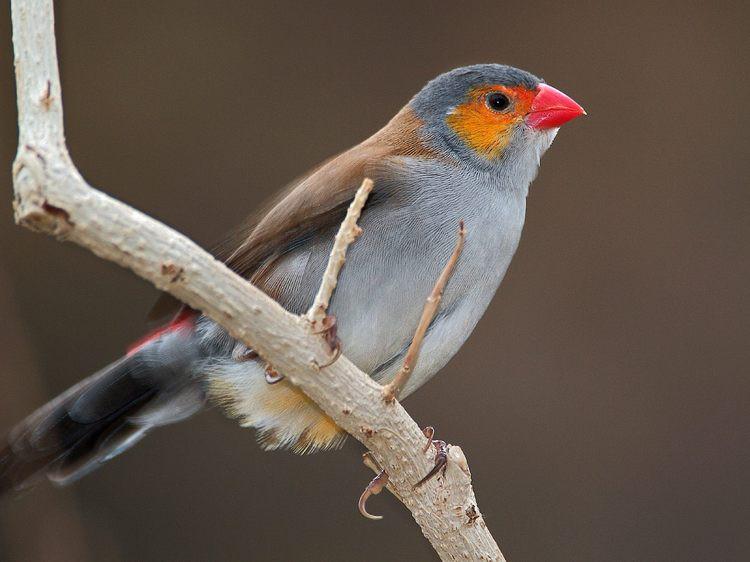 Птицы-радуге сродни животные, краски, природа, радуга