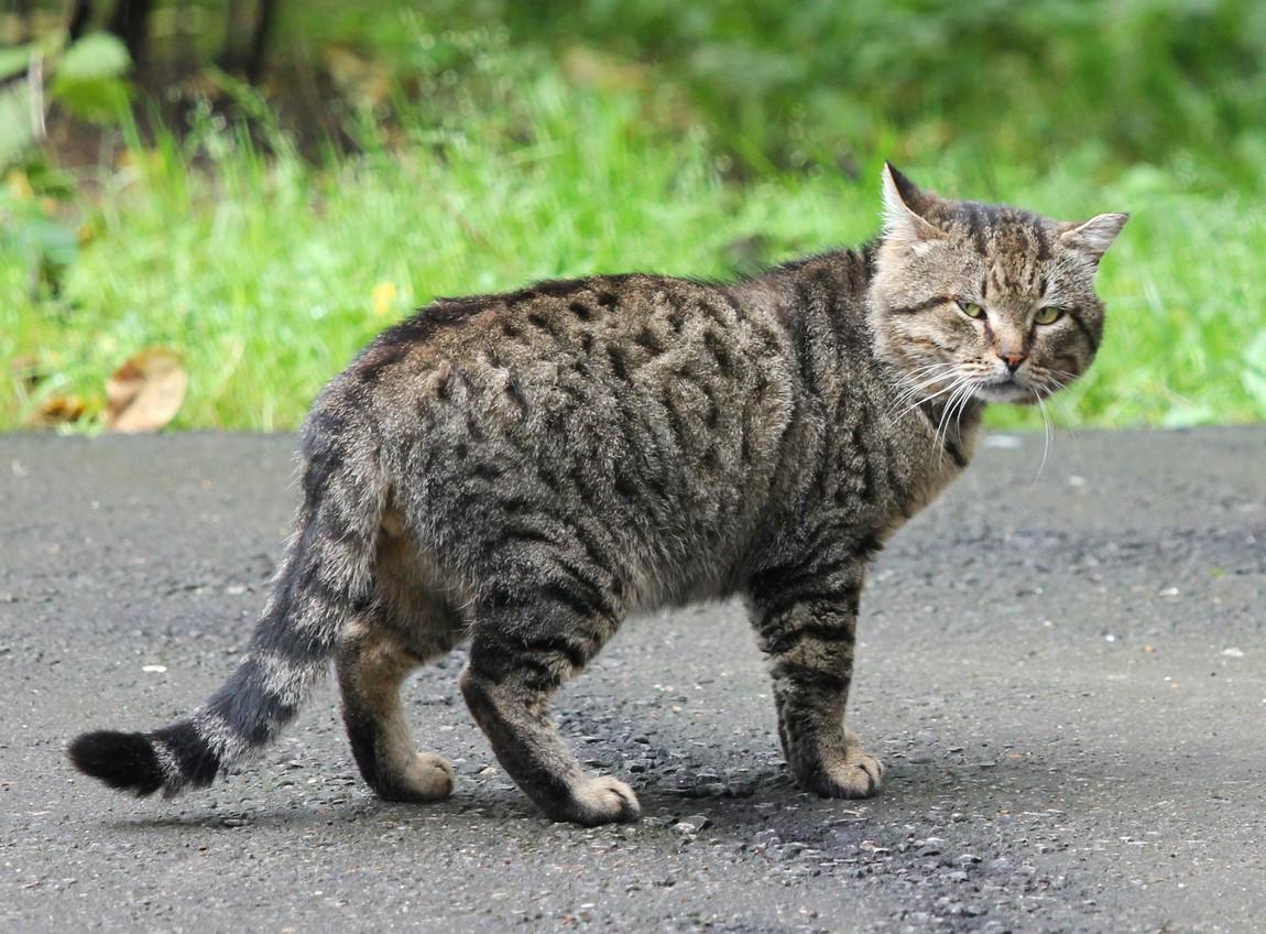 Безумие мартовского кота