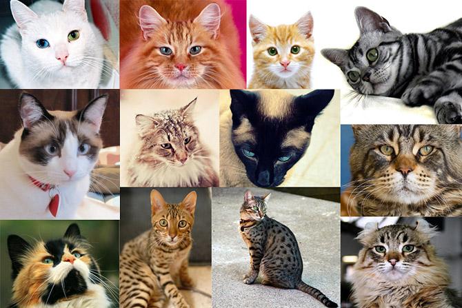 КОШКИН ДОМ. Самые красивые кошки в мире