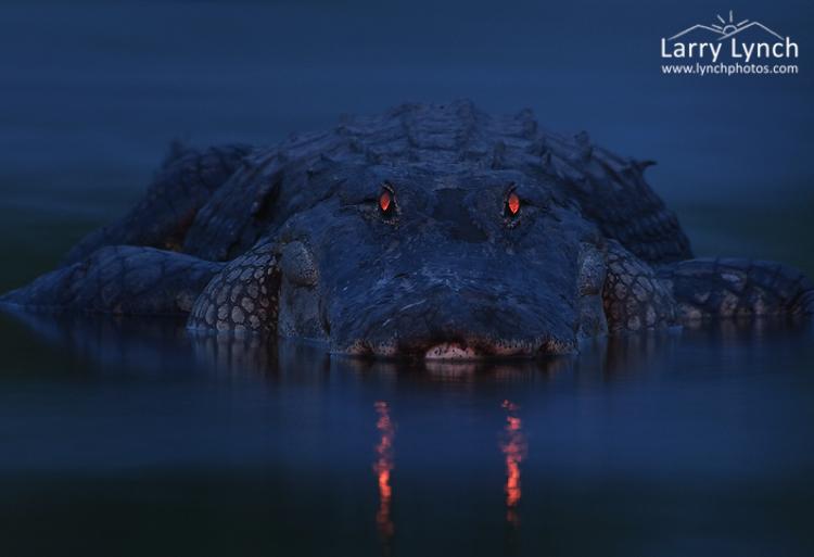 Парень просто сфотографировал ночное болото, а когда проявил снимок чуть не заплакал от страха