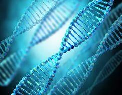 Интервью с биологом о перспективах генной инженерии