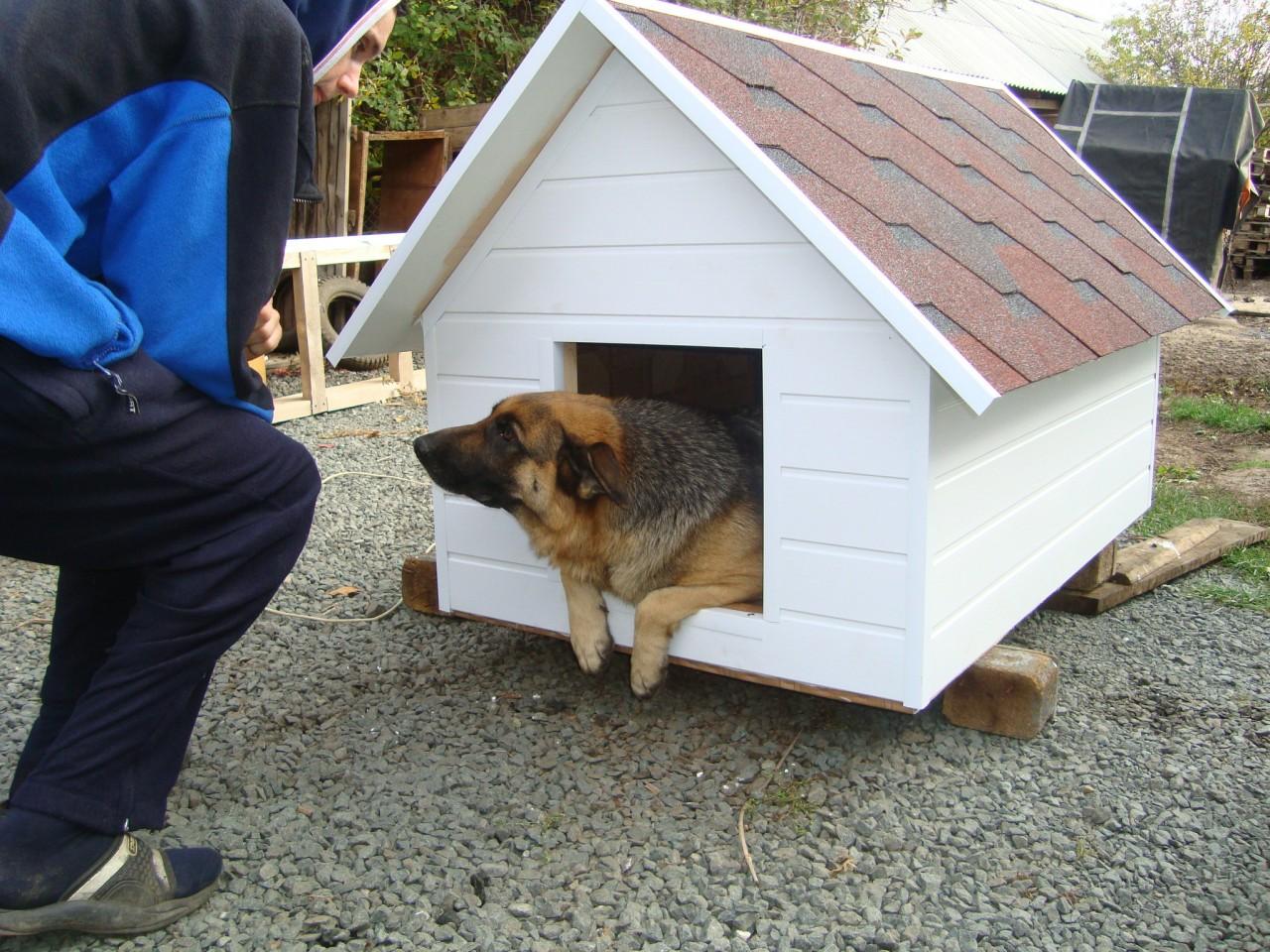 ЕвроБудка для собаки своими руками