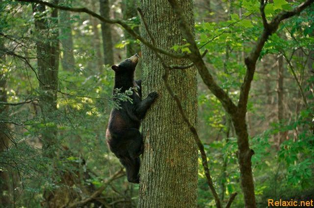 wild_animals_019