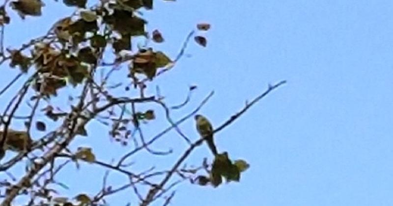 В Барнауле попугай сбежал из дома, подружился с голубями и не собирается возвращаться назад