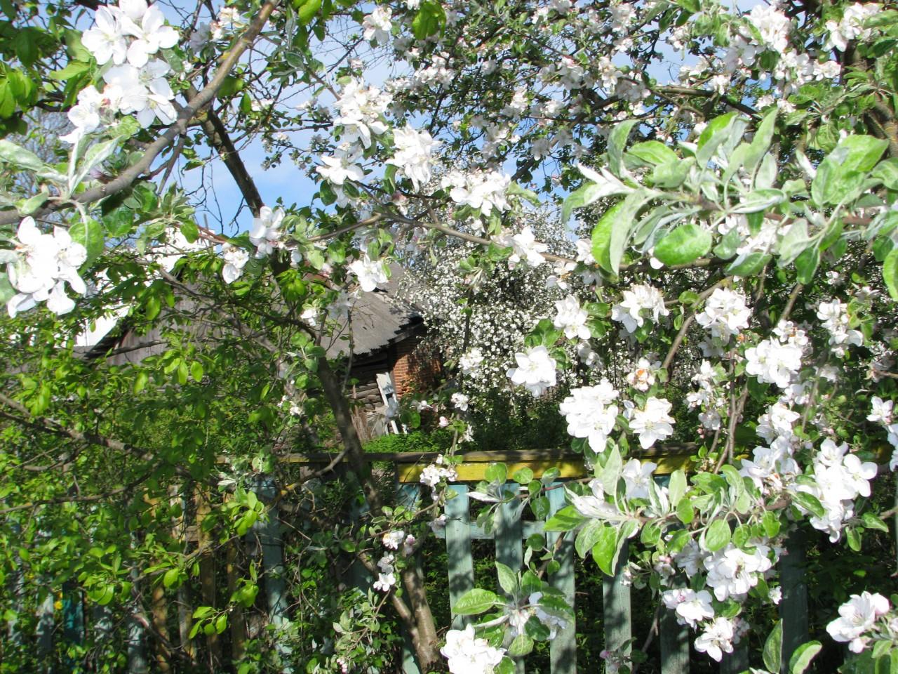 Неуловимая весна