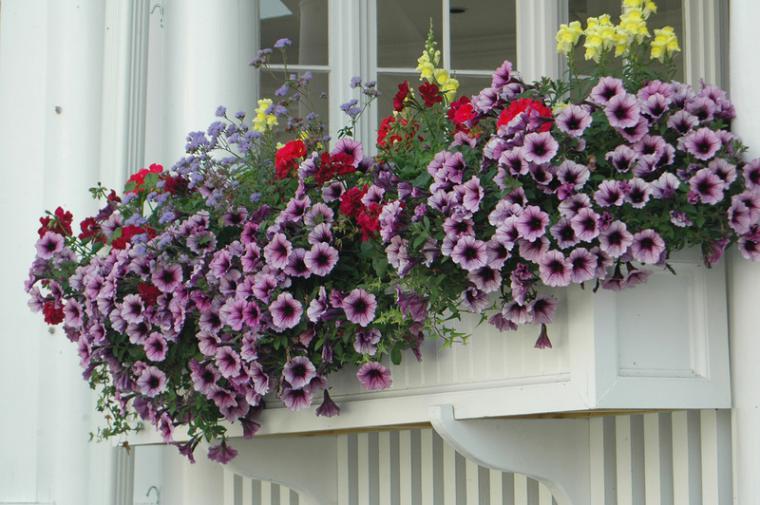 Раскрась жизнь яркими красками: горшечные растения у вас на балконе и на даче