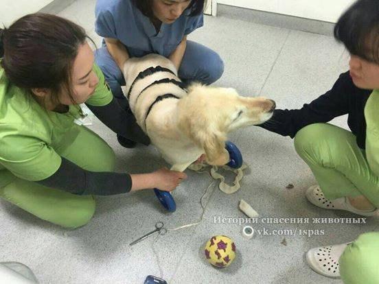 В Южной Корее, где мясо собаки – деликатес, Ши Ши была одной из многих родившихся, чтобы быть съеденными.