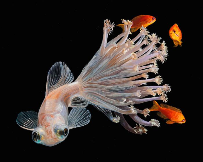 Коралловые рыбки. Автор: Lisa Ericson.