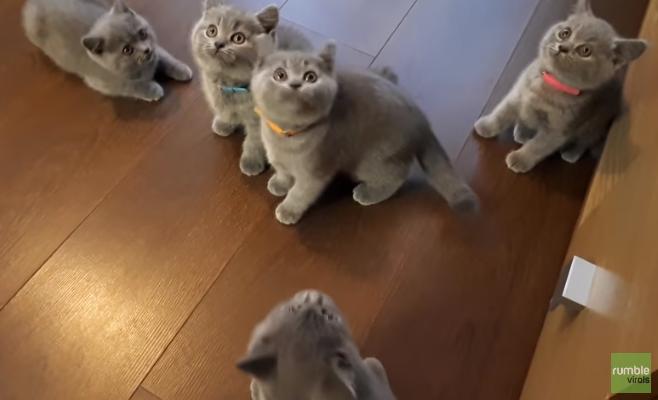 Играющие с йо-йо котята покорили пользователей Сети