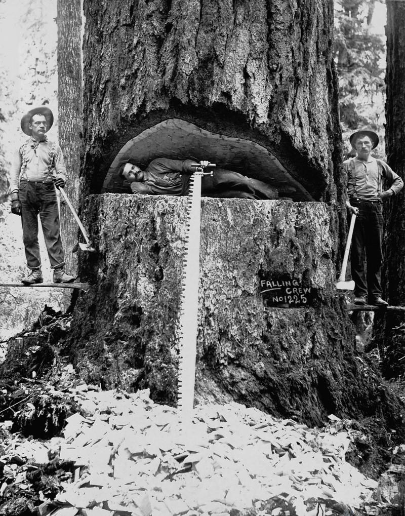 Когда деревья были большими: 1892-1937: американские лесорубы