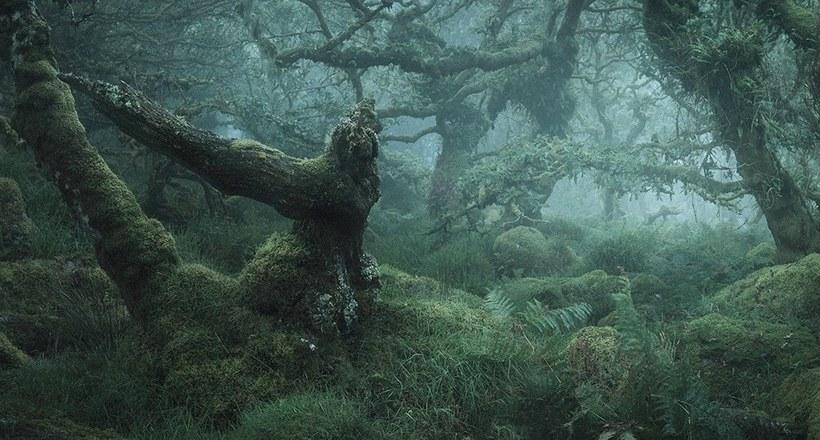 Мистические фотографии чарующих английских лесов