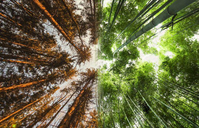 Как прекрасен этот мир: Удивительное сходство пейзажей-близнецов из разных уголков планеты