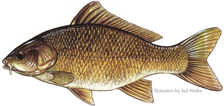 Рыбалка - Ветров И.В. - Влияние газовой среды на термические превращения сернистого угля