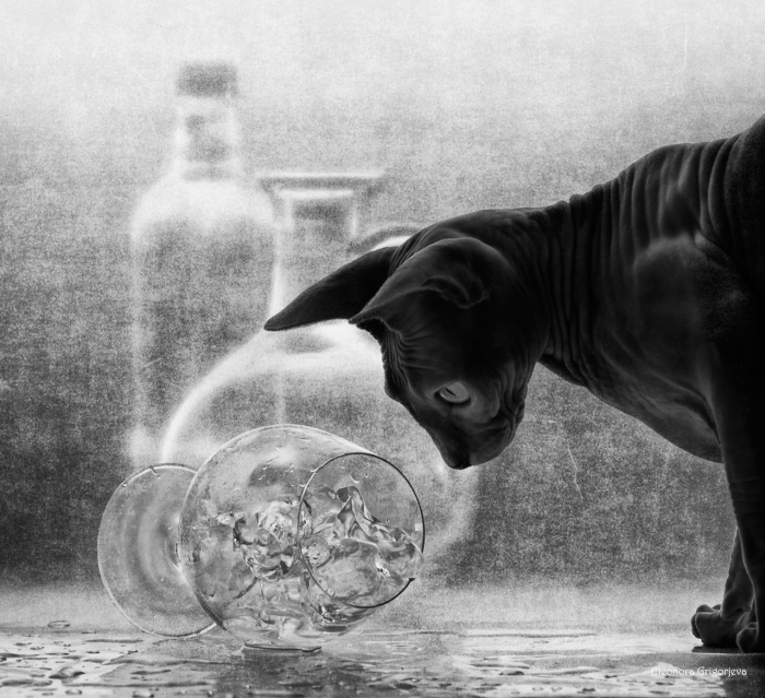 Оливка со льдом. / Фото: Элеонора Григорьева.