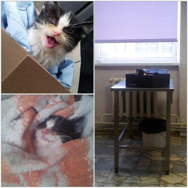 10 декабря 2014 года нашел сие чудо в подъезде История с хорошим концом, котенок, неравнодушие, спасение