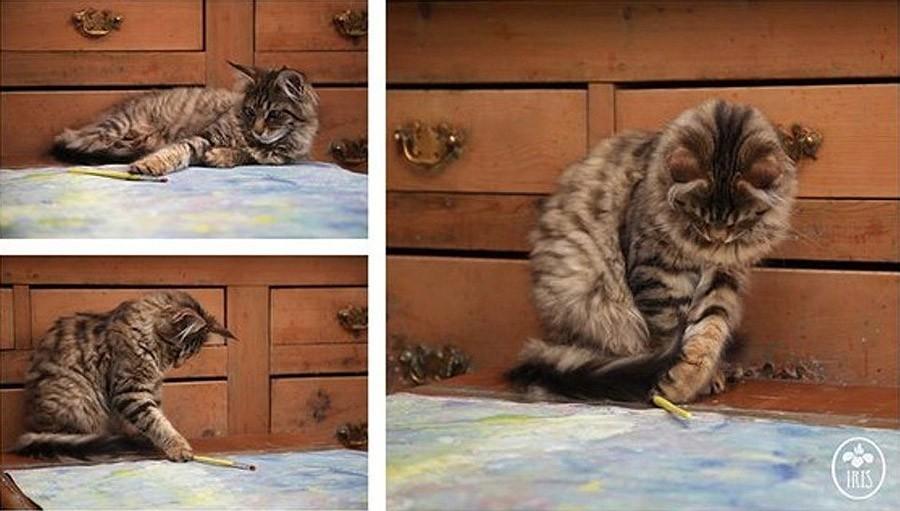 IrisandThula04 Как кошка Тула помогает девочке с аутизмом