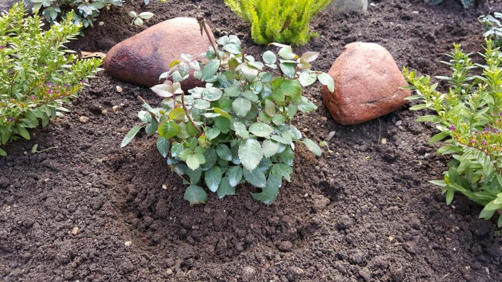 Укрываем растения на зиму правильно