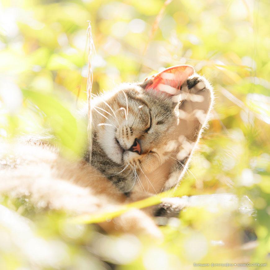 Солнечные кошки учат людей многому в любой момент их жизни - 2