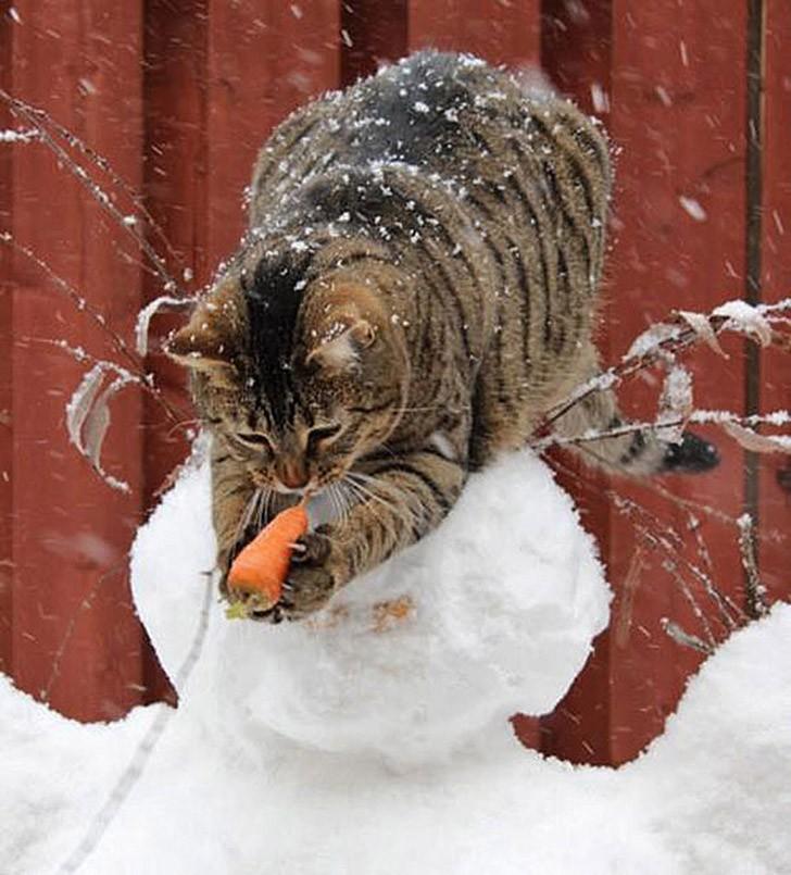 CatThieves10 Котики, которых застали врасплох