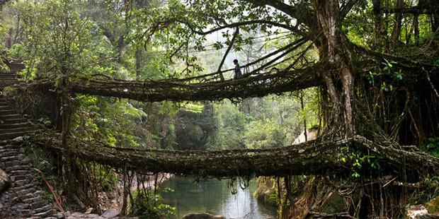 «Живые» мосты в Индии