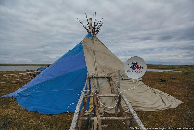 Север России: жизнь в оленеводов в Тундре