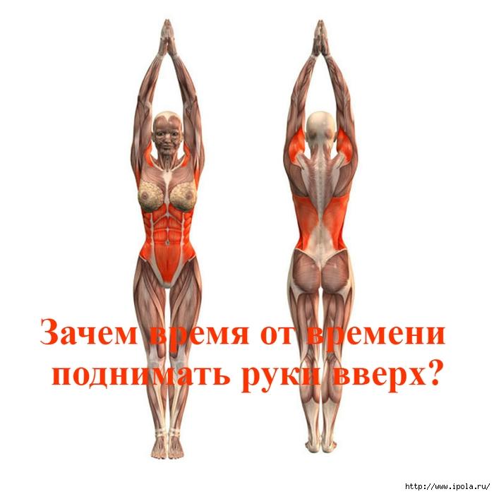 Зачем время от времени поднимать руки вверх?